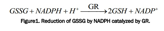 Reduction of GSSG by NADPH catalyzed by GR